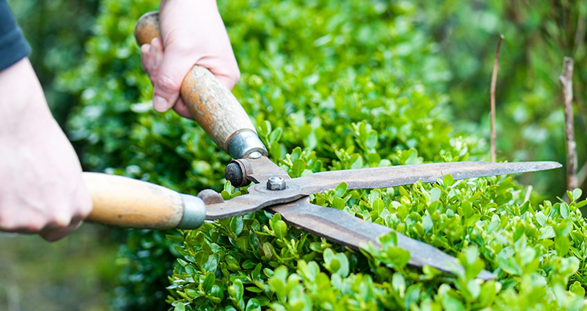 Why The Landscaper Is The Best For Business
